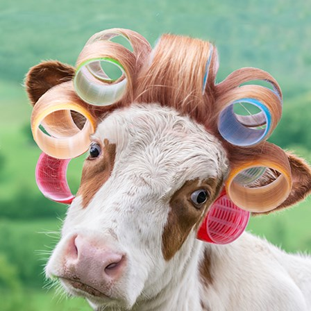 Cow in Curlers by A.V. Art art print