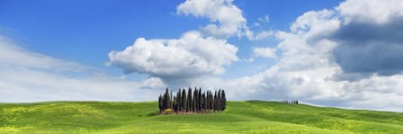 Cypresses, Val d'Orcia, Tuscany by Frank Krahmer art print
