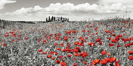 Farm House with Cypresses and Poppies, Tuscany, Italy by Frank Krahmer art print