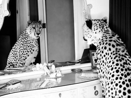 Cheetah Looking in Mirror by Emma Rian art print