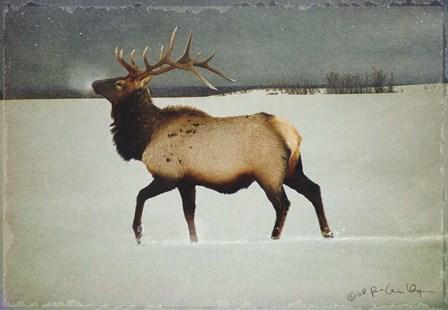 Silver Mist Elk by Chris Vest art print